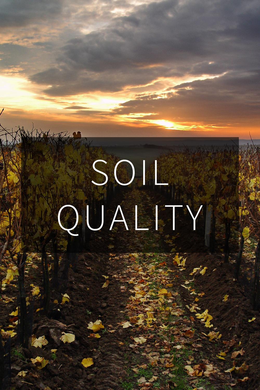 Vineyards Autumn (Pavel Jedlicka).jpg