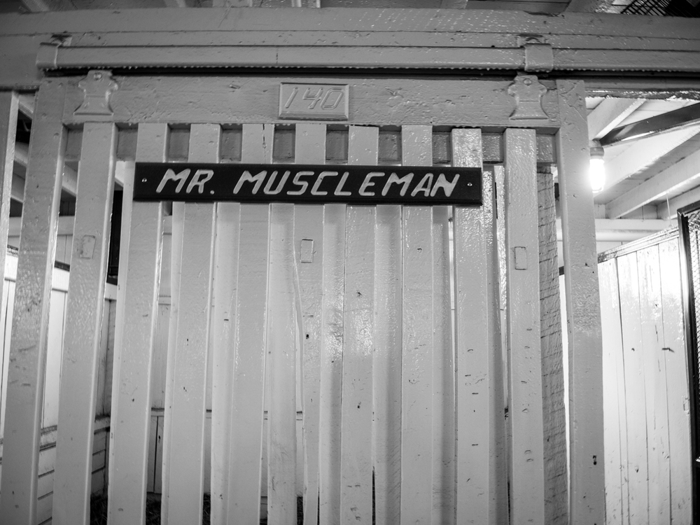 Mr. Muscleman in the Hall of Champions at the Kentucky Horse Park