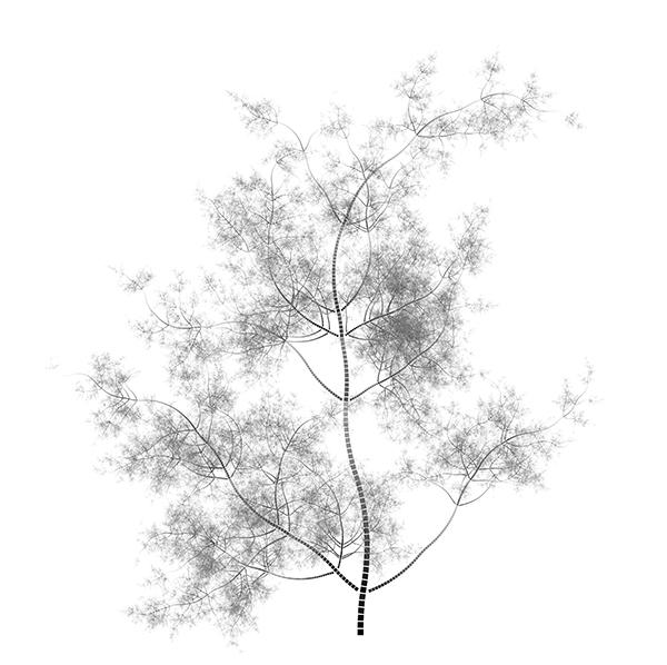 Pubes Tree