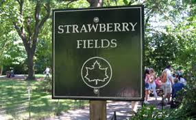 Strawberry Fields1.jpeg