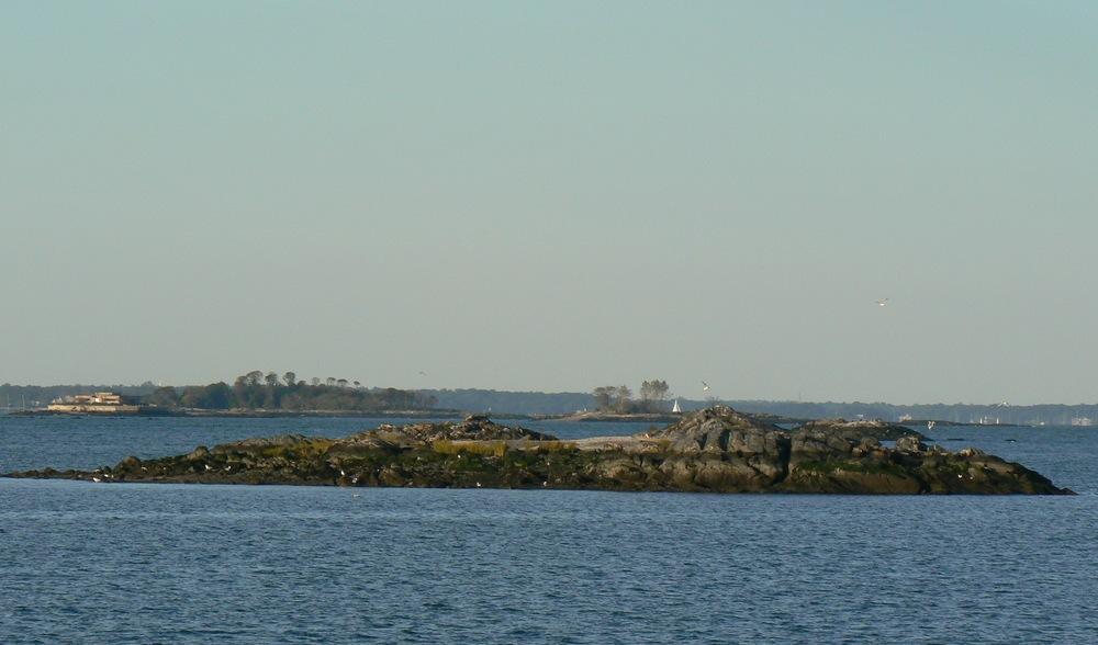 Rat_Island2.JPG