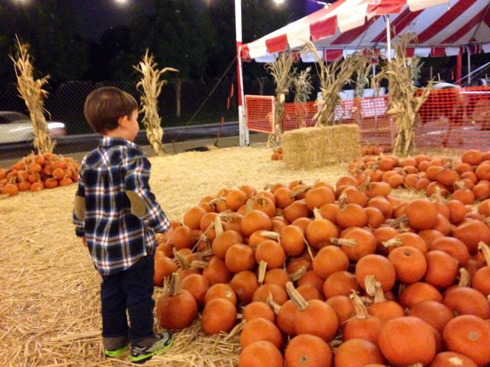 Oct. 9. 2013, Pumpkin patch wonder.
