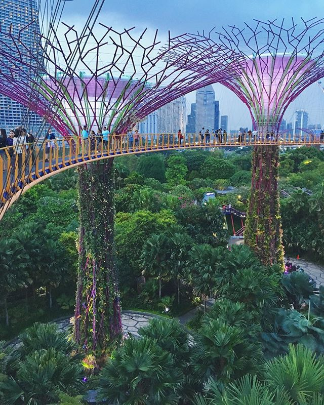 Honeymoon: Day whatever – Singapore! Supertrees, 8k ppl/km², worlds best botanical garden, worlds best cheap food, Malay Muslims, Indian Hindus and Chinese Buddhists right next door, then a quiet bed in the sky.