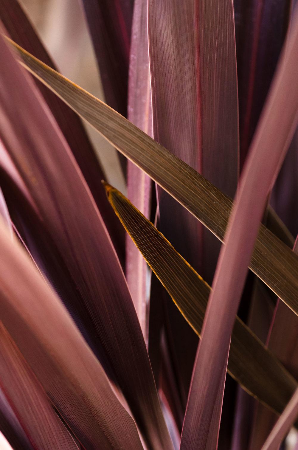 casenruiz-red-plant.jpg