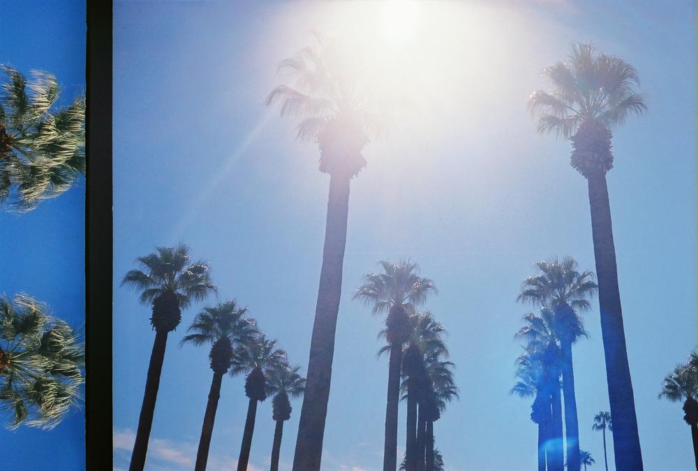 casenruiz.com-palm-trees.jpg