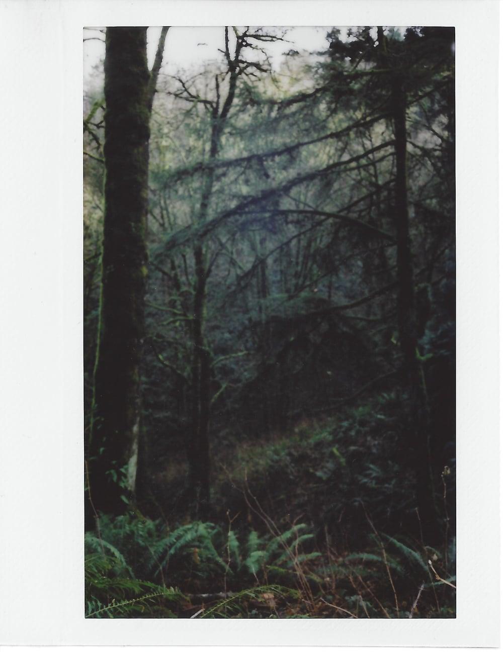 Portland-Polaroid-12-casenruiz.jpg