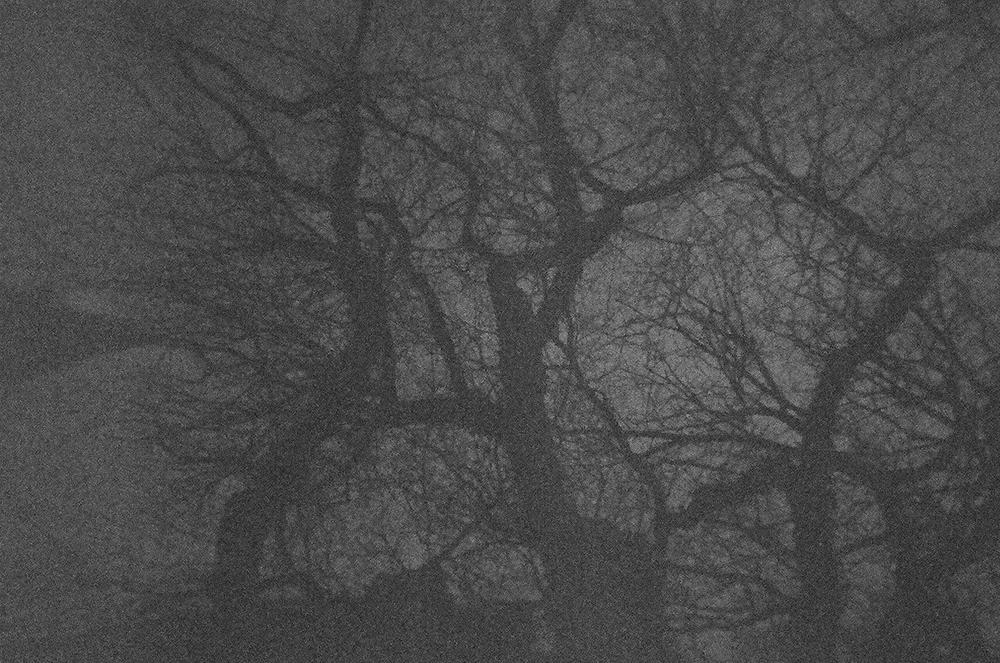 Portland-Trees-Film-5-bw-casenruiz.jpg