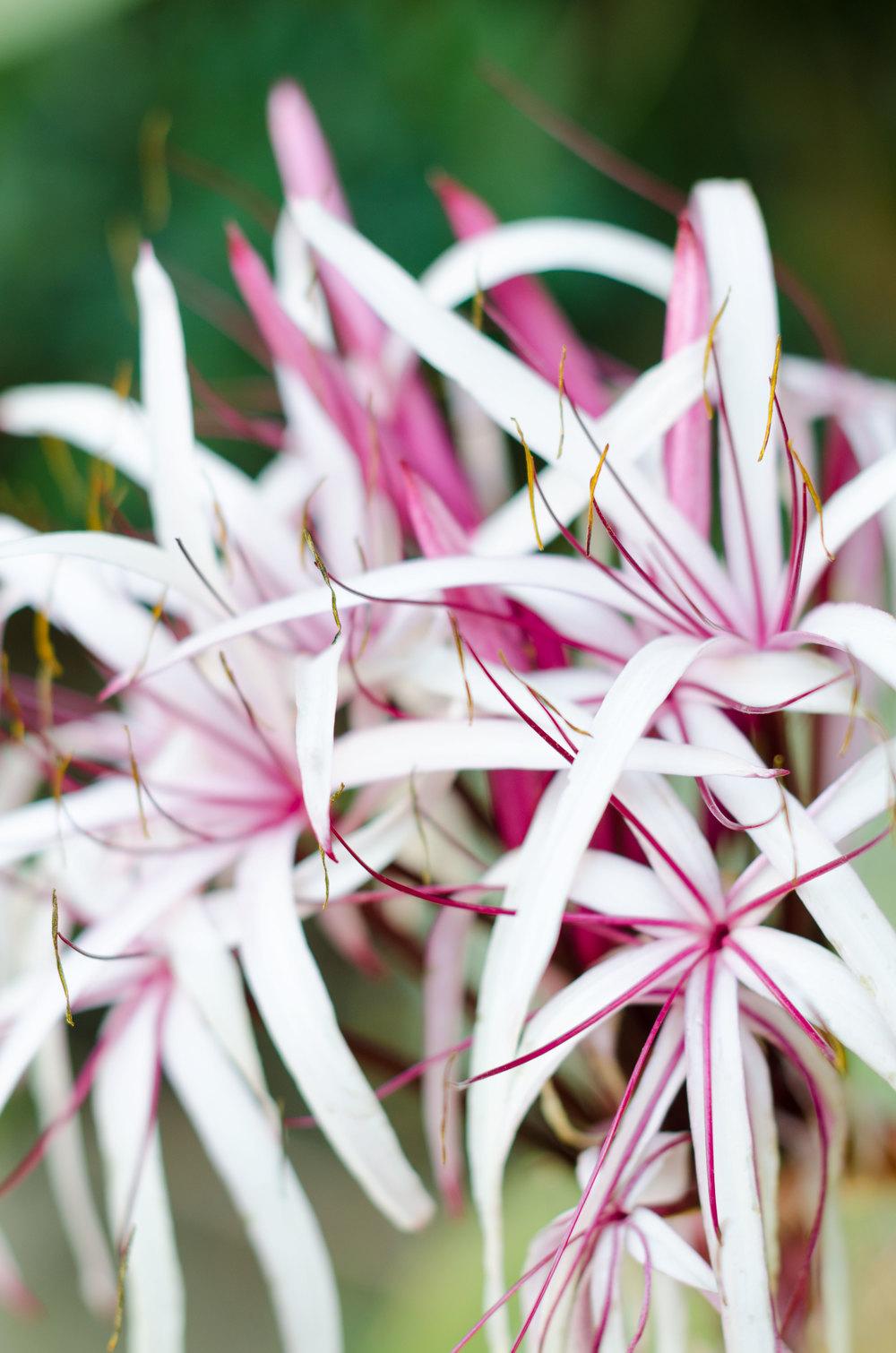 Flower-casenruiz.jpg