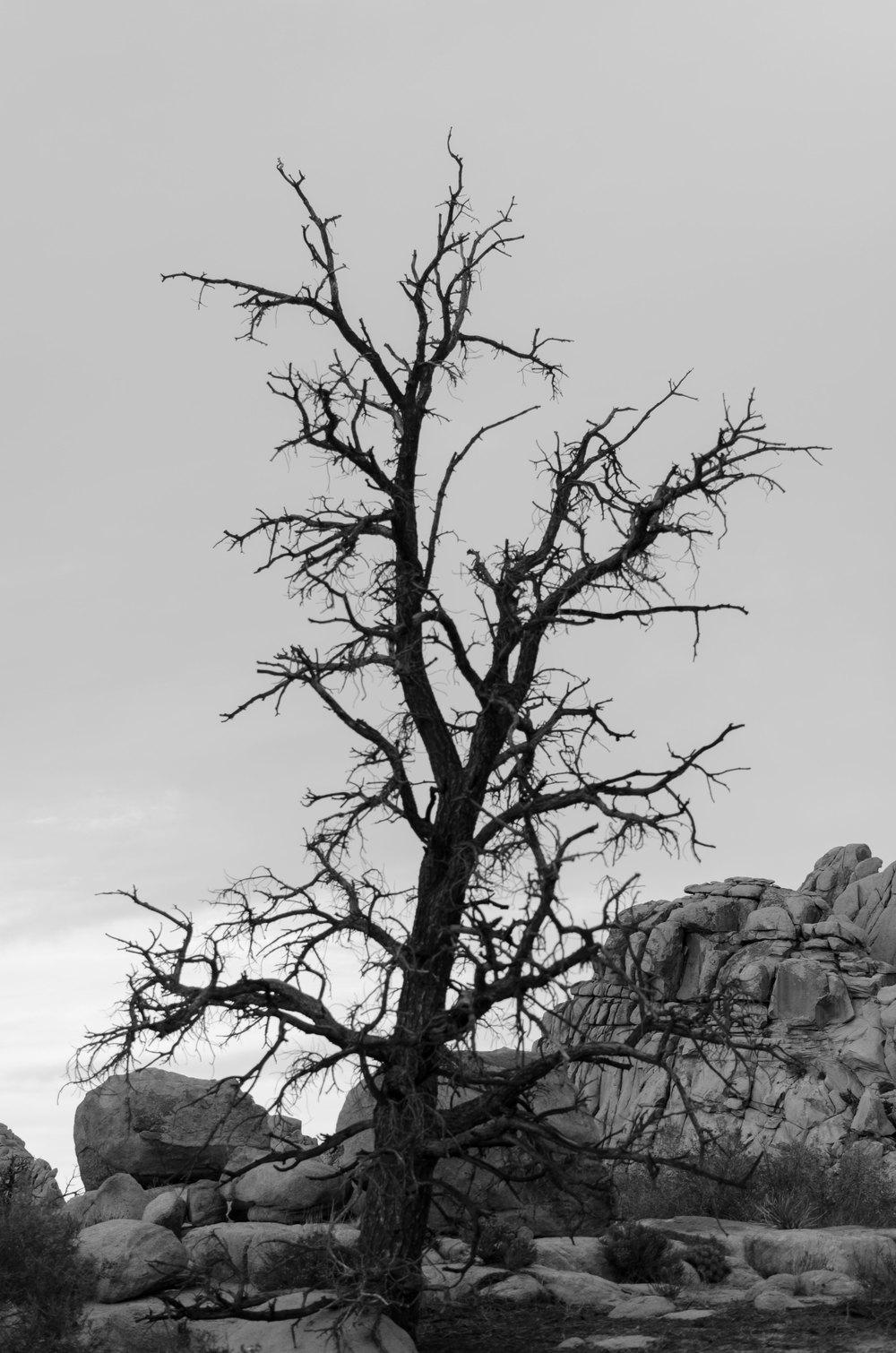 Joshua-Tree-6-bw-casenruiz.jpg