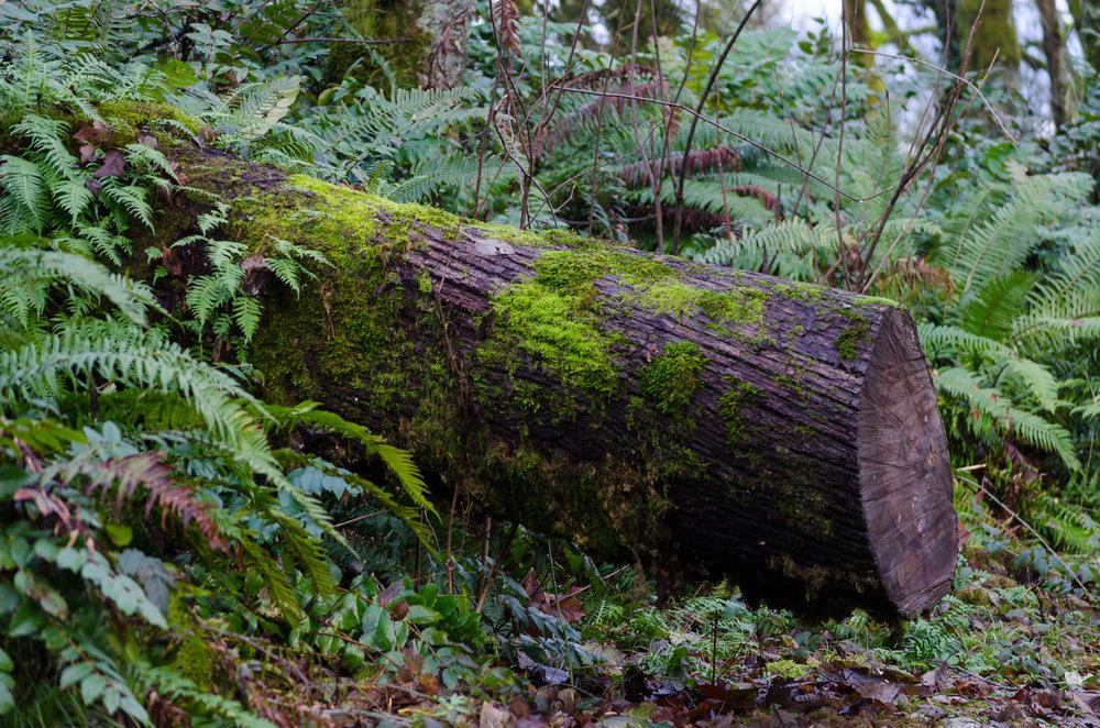 Portland-Log-Woods-casenruiz.jpg