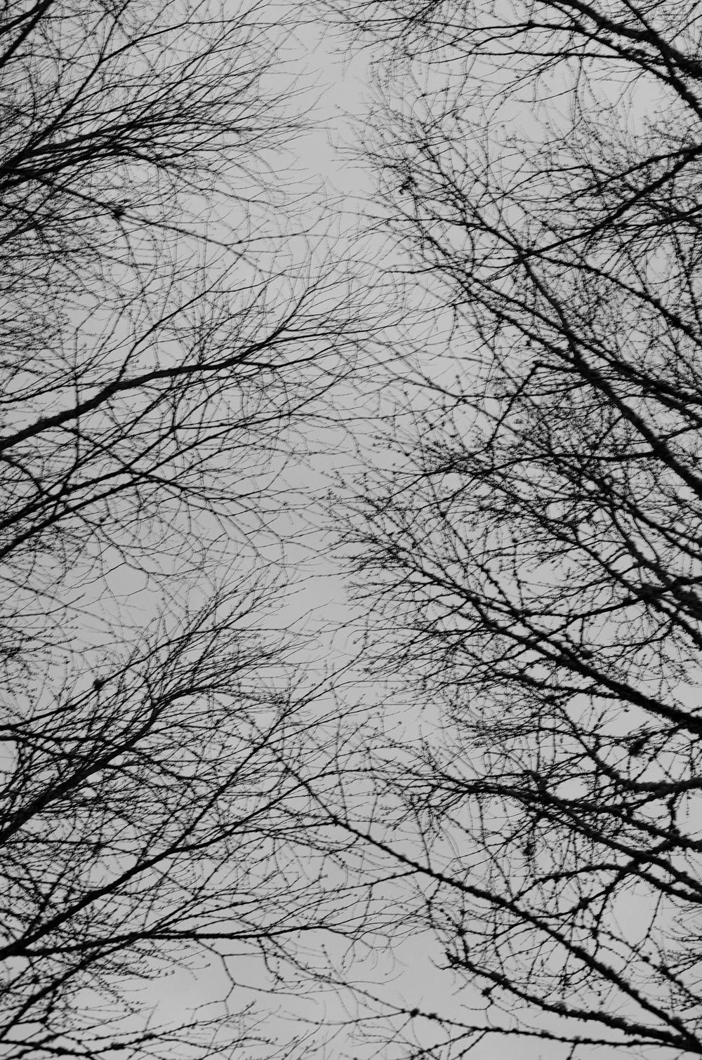 Portland-Trees-Branches-2-bw-casenruiz.jpg