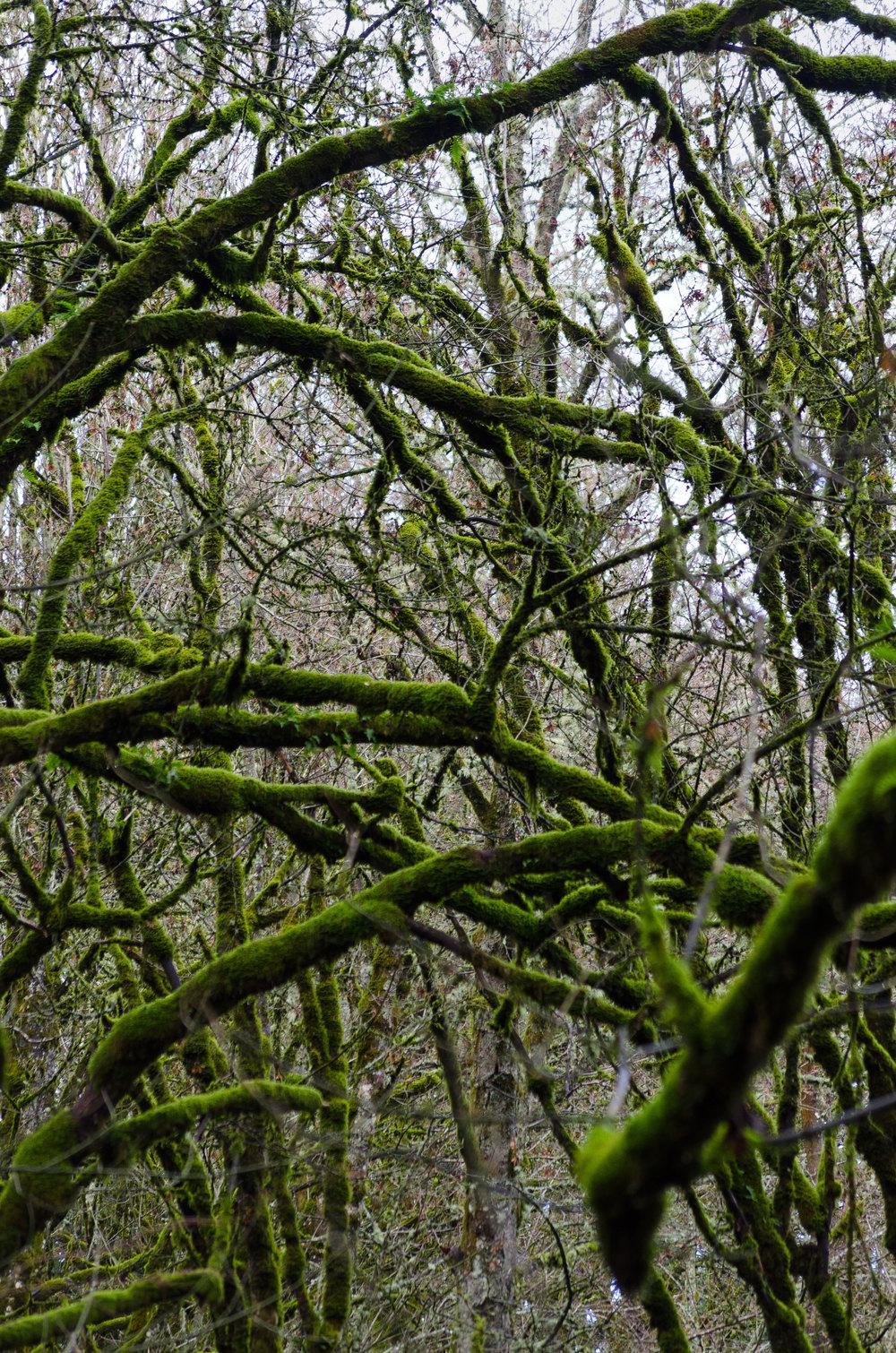Portland-Trees-Woods-3-casenruiz.jpg