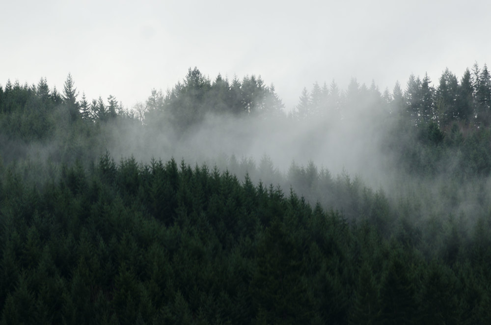 Portland-Trees-3-casenruiz.jpg