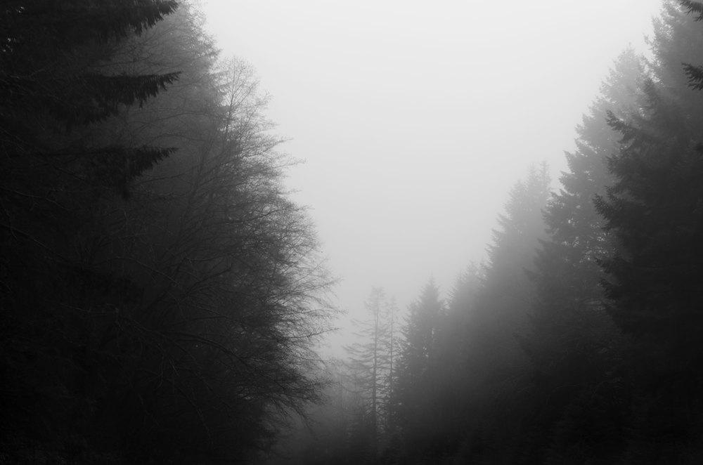 Portland-Trees-8-bw-casenruiz.jpg
