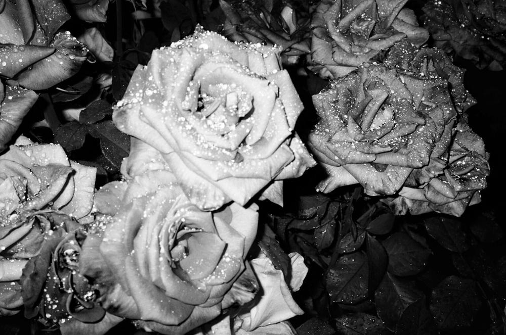 Roses-SF-Film-1-bw-casenruiz.jpg