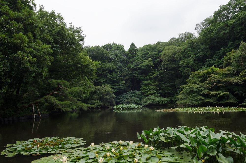 Tokyo-Garden-2-casenruiz.jpg