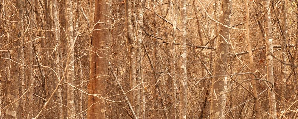 Aurelian Wildwood, by Tristan Stuart, Tasmania.