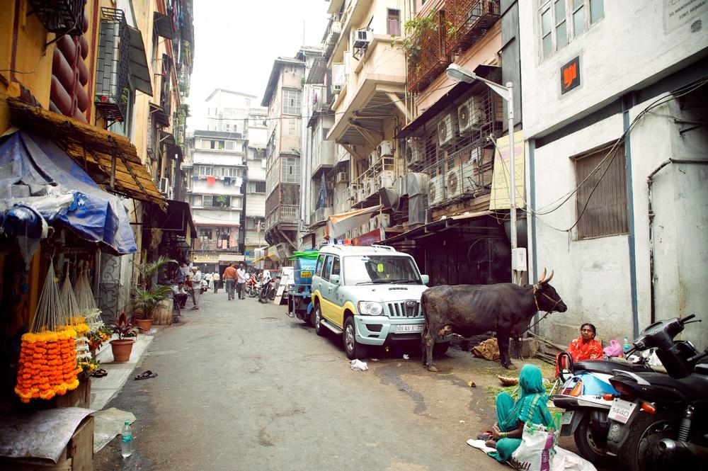India - Day Twelve 151.jpg