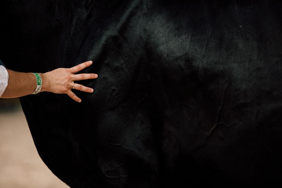 photographe alice bertrand national holstein france-269.jpg
