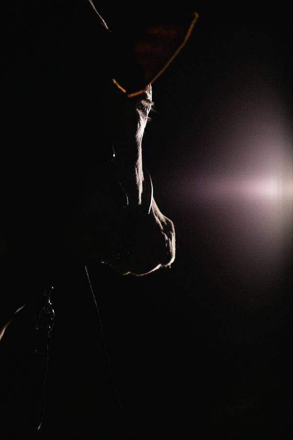 alice bertrand photographe vache-15.jpg