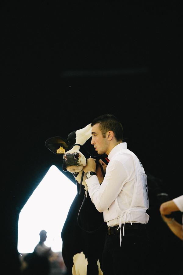 photographe prim holstein france alice bertrand-5.jpg