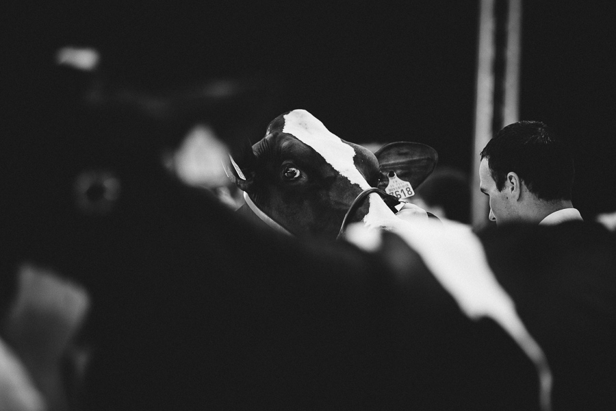 photographe prim holstein france alice bertrand-18.jpg