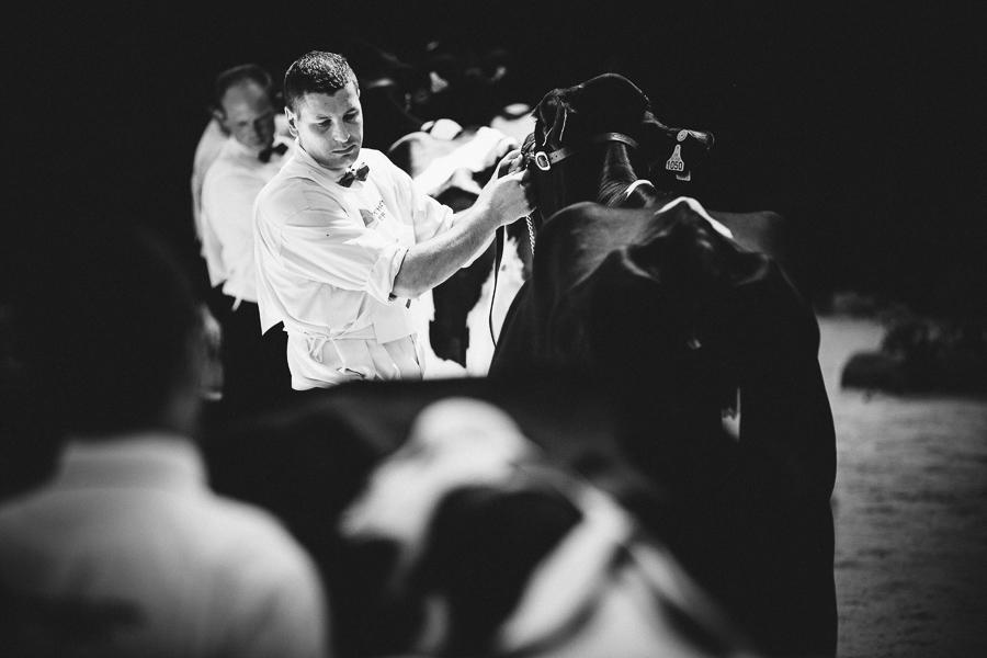 photographe prim holstein france alice bertrand-31.jpg