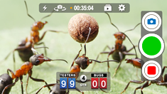 Bugs playing volleyball.  And losing badly to our beta team.  Boom baby!