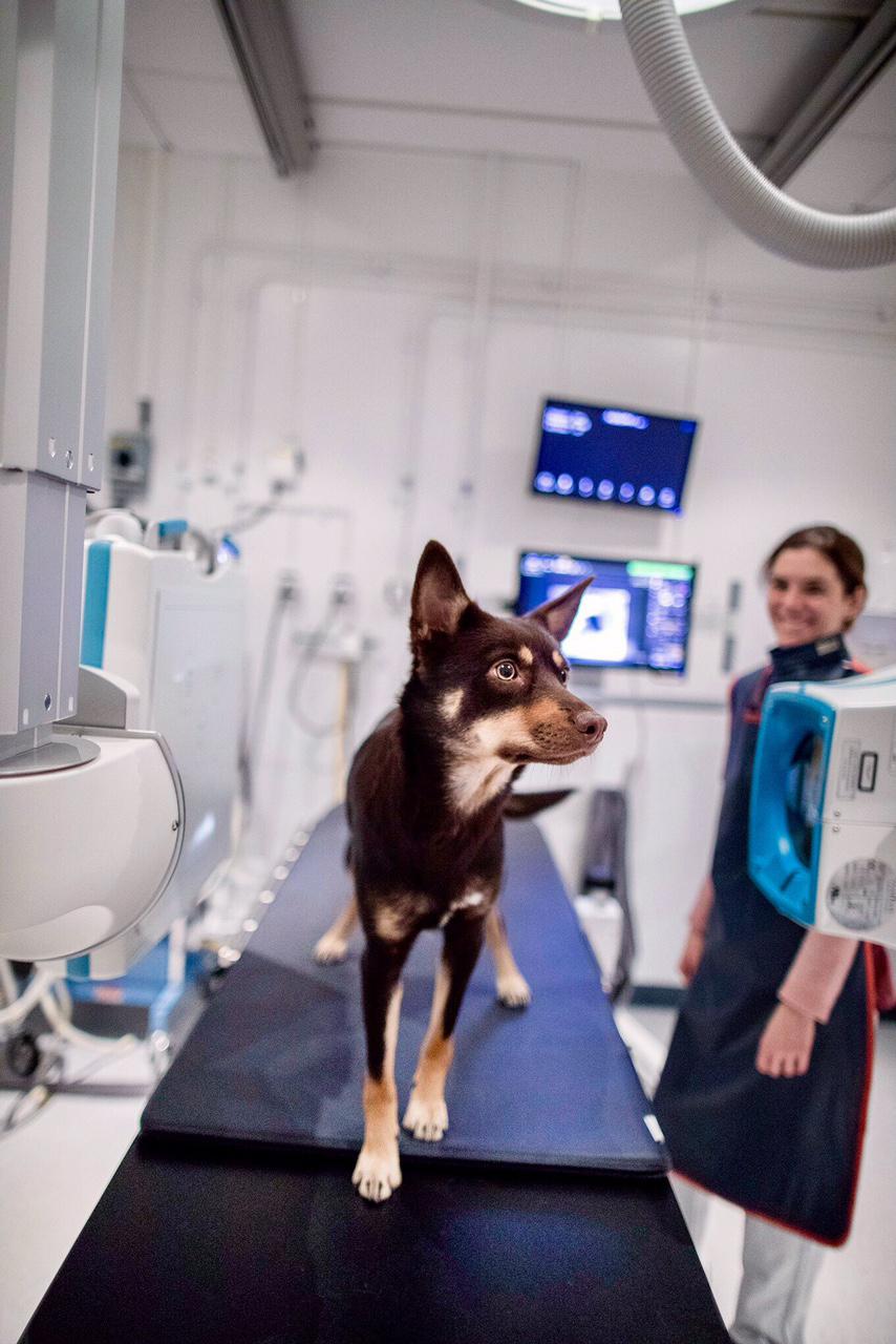 Inversitetsdjursjukhuset i Uppsala får besök av fotograf Johan Wahlgren