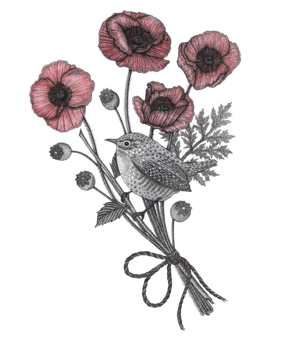 Wren-&-Poppies.jpg