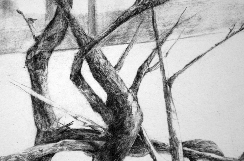 "each kindness reaching toward another.  (detail)   pencil on paper. 11 x 15"" 2011."