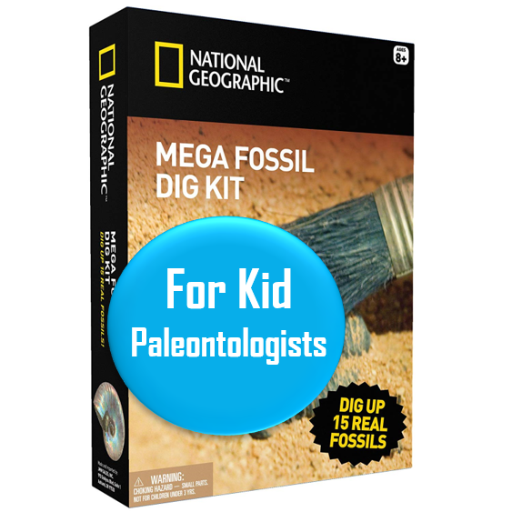"Mega Fossil Dig Kit - Ages 8-15   This kit allows your kid to excavate their own *real* fossils. Promising review: ""My daughter really enjoys this! Real fossils embedded in a man-made clay. She didn't have the muscle strength to do this alone, but enjoys both the task and the discovery. We enjoyed looking up the fossils online afterwards. Great gift for introducing paleontology to young children. """