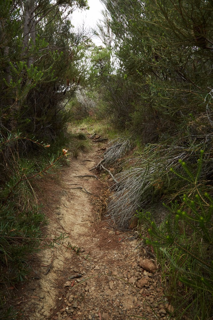 """The Right Path, Currarong NSW"" - Martyn Thompson"