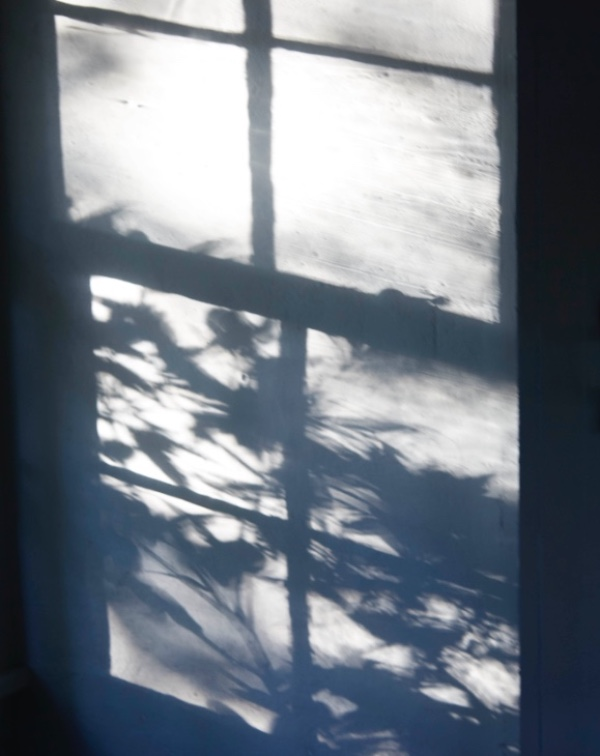 IN PRAISE OF SHADOWS from AUGUST JOURNAL-Martyn Thompson