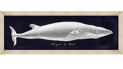 india-hicks-rorqual-du-nord-framed-wall-art-d-20130308180554457~255658.jpg