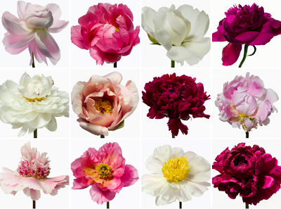 Paul+Lange+Blooms.png