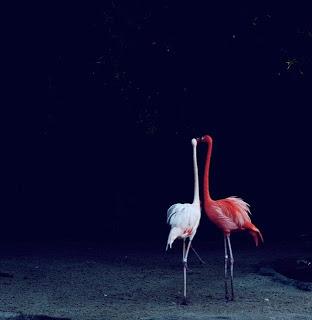Pink+Ladies.jpg