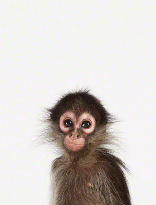 Baby-Monkey-Art-for-Nursery.jpg