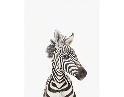Baby+Zebra_Art+for+Nursery_www.theanimalprintshop.com_01.jpg