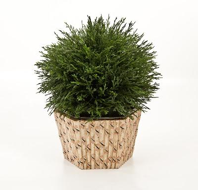 Treillage+Bamboo+planter.jpg