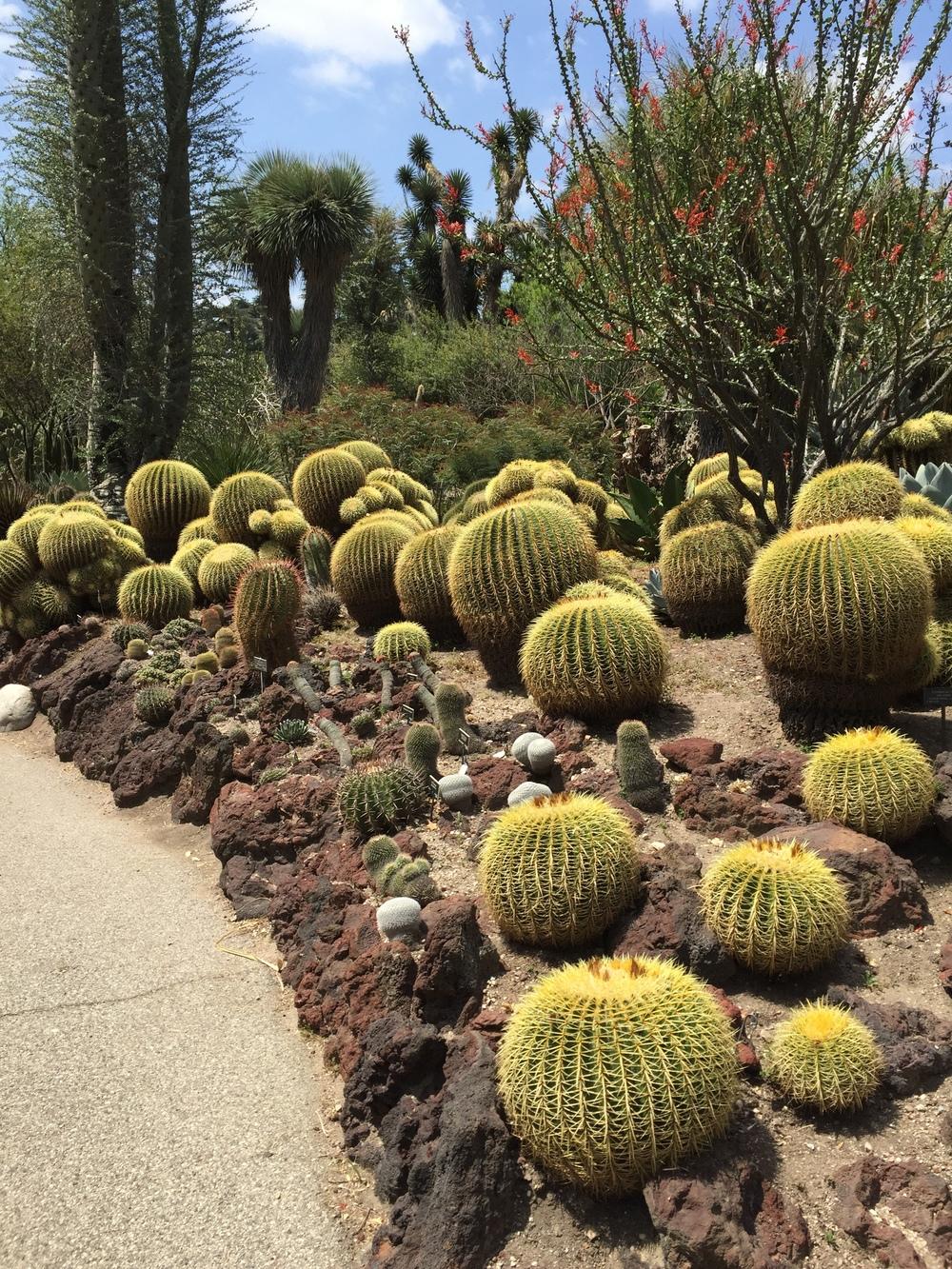 CALIFORNIA LIKE A LOCAL: A VISIT TO THE HUNTINGTON BOTANICAL GARDENS ...