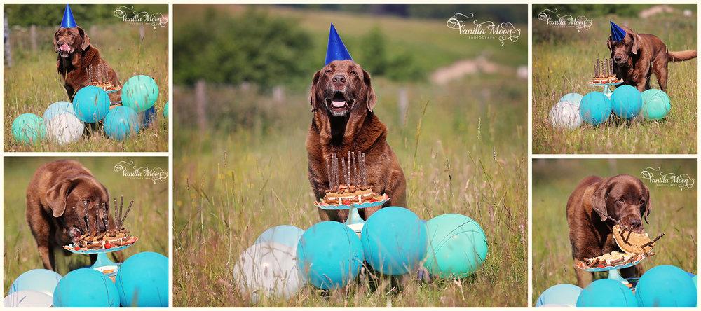 Pet Portrait Photography, Scotland