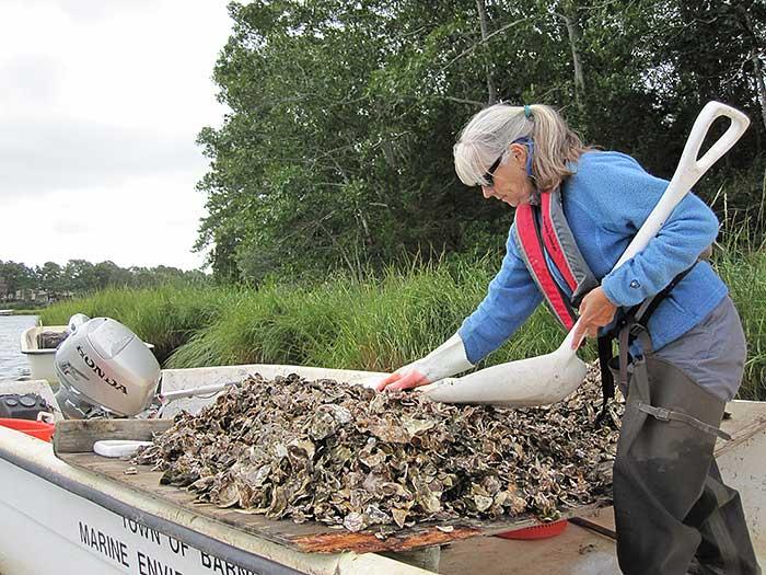 Loesje-gathering-oysters.jpg