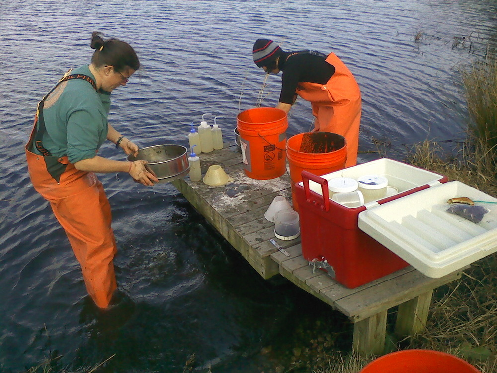 Water Quality Monitoring at Rushy Marsh, Cotuit, MA