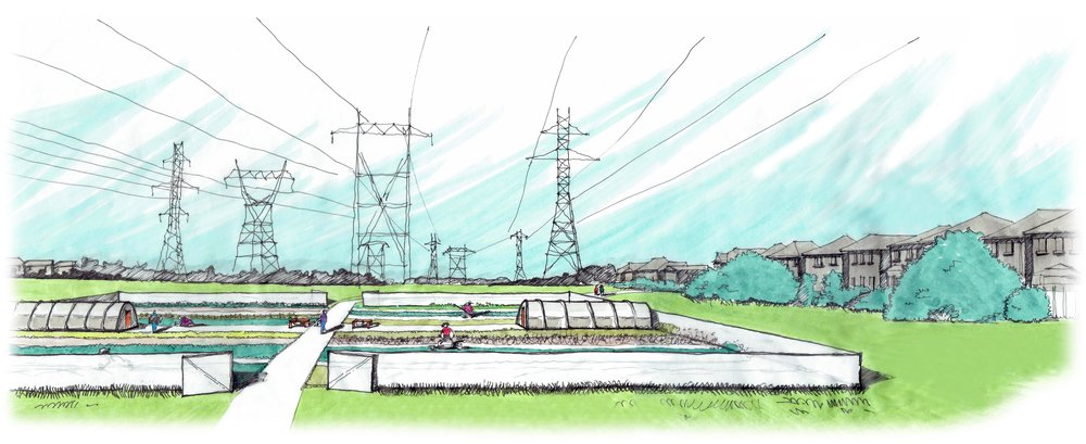 Concept Urban Agriculture in the Hydro One Corridor - CEED Project -Rendering by Michelle Moylan