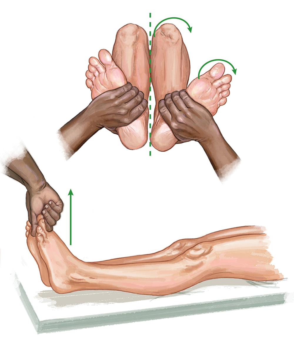 Leg and knee, physical examination. Netter's Concise Orthopaedic Anatomy ©Elsevier