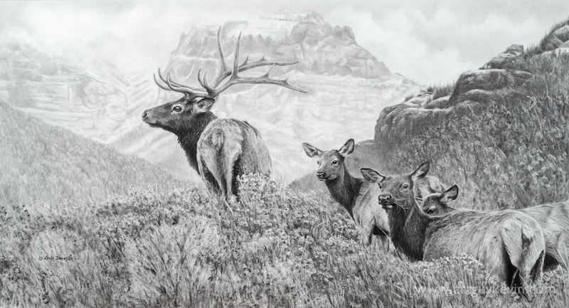 """Before the Snow Flies - Elk"""