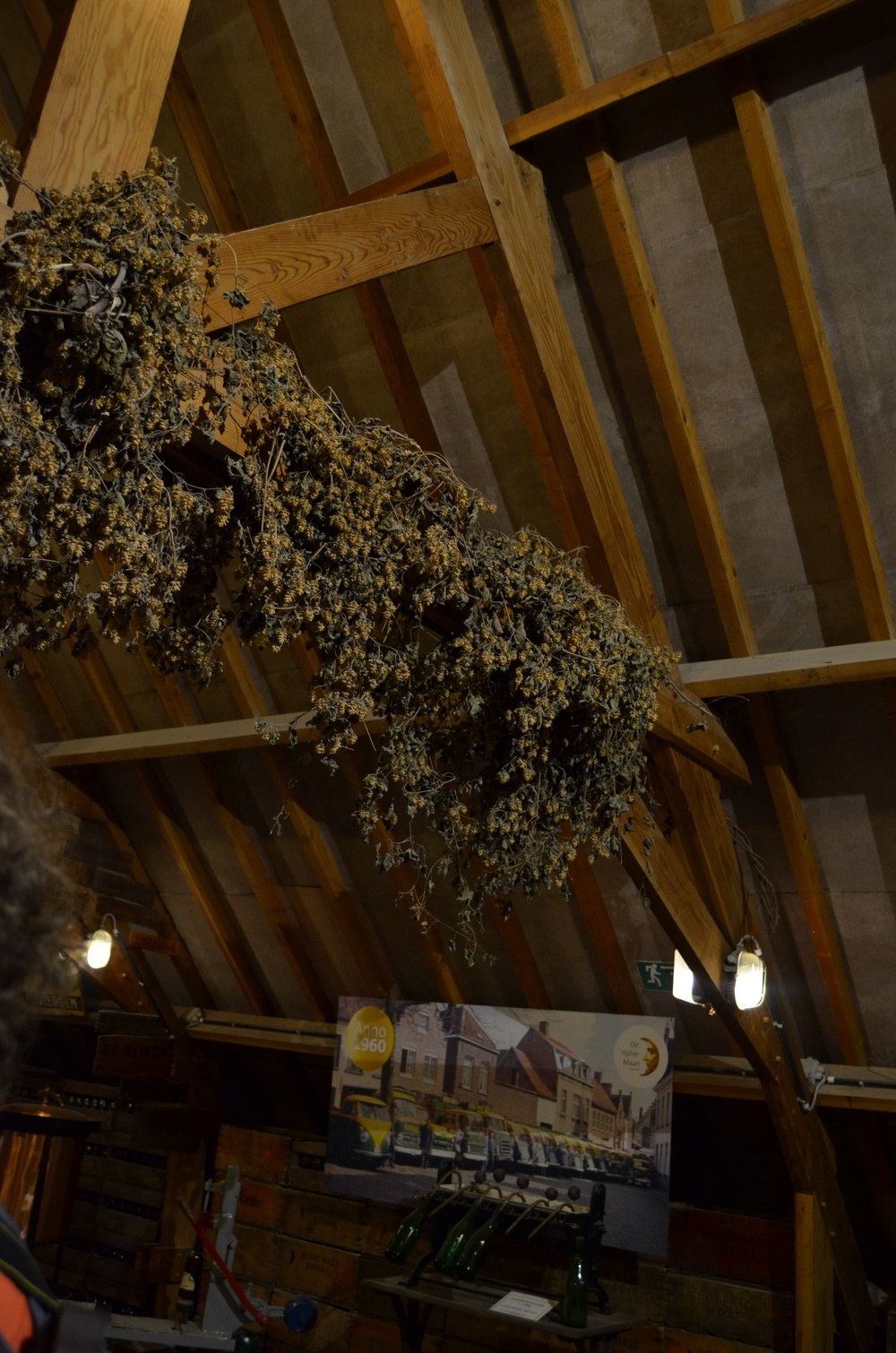 dried hops on the ceiling