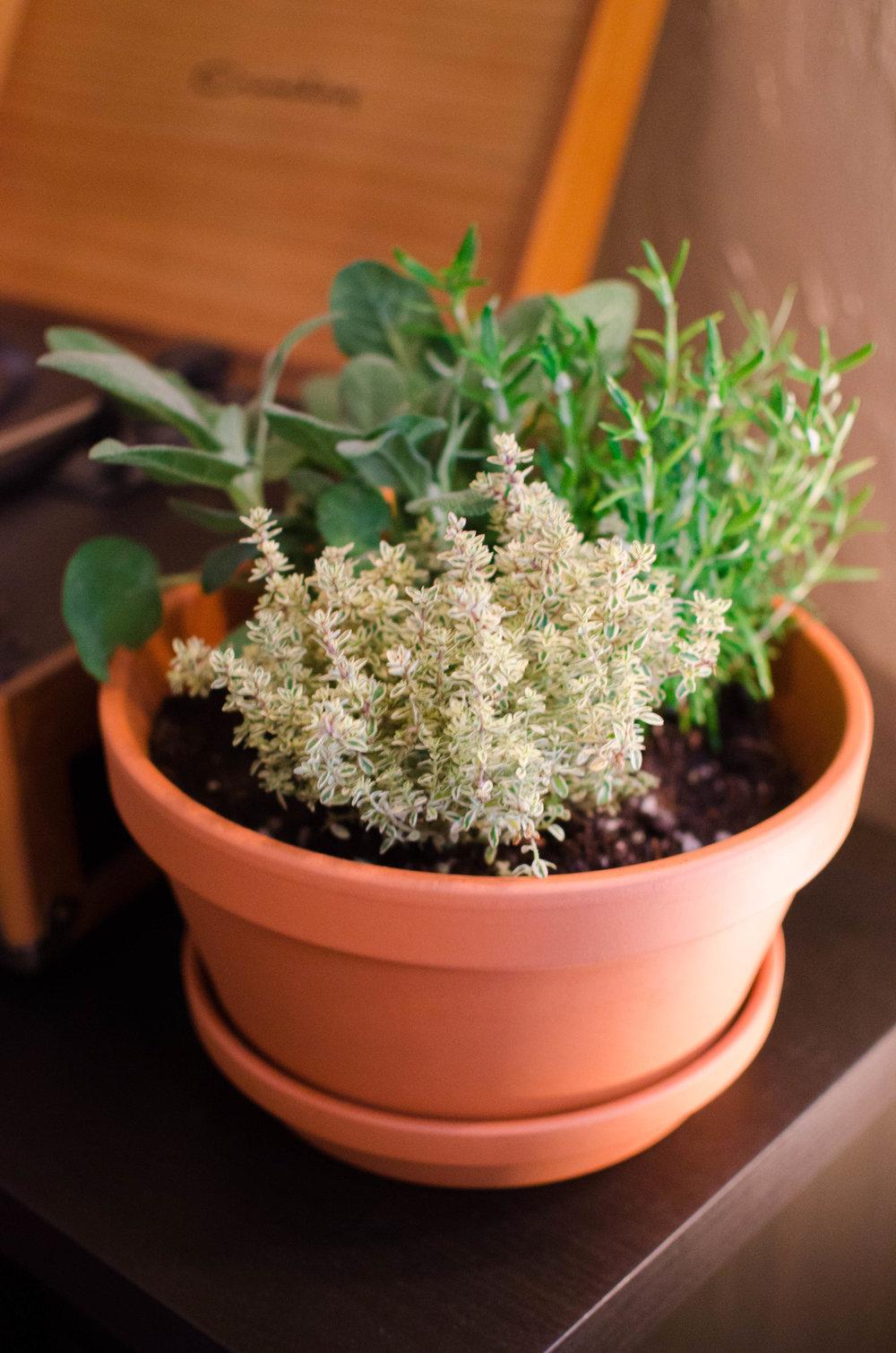 Herb Garden-2.jpg