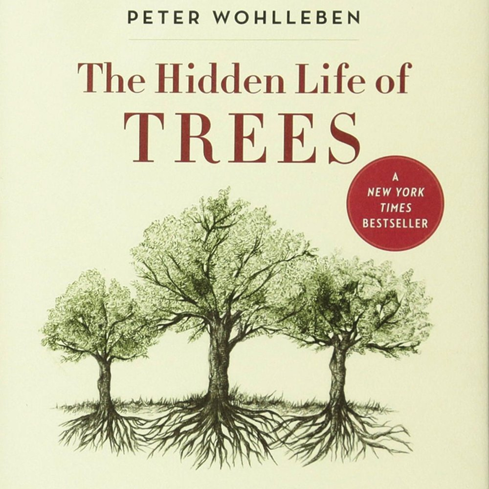"""It seems the trees can count!"" writes Peter Wohlleben in this astounding, yet utterly boring book about trees. (I'm not sure how something can be astounding and boring at the same time, but Wohlleben has a peculiar talent for it. Which is fascinating in itself.)"